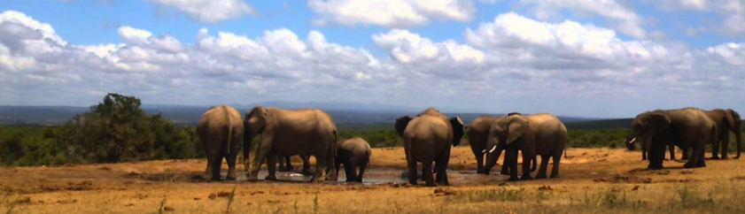 Addo Elephant Park Budget Family Holiday Accommodation